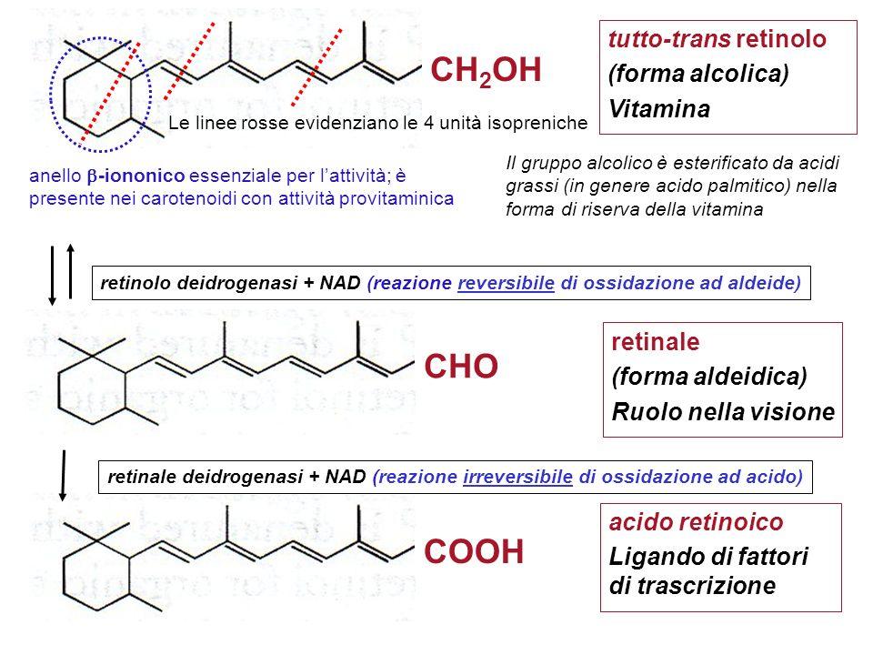 CH2OH CHO COOH tutto-trans retinolo (forma alcolica) Vitamina retinale