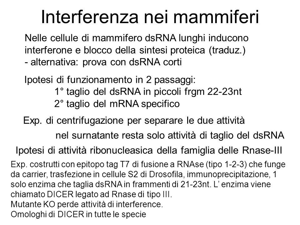 Interferenza nei mammiferi