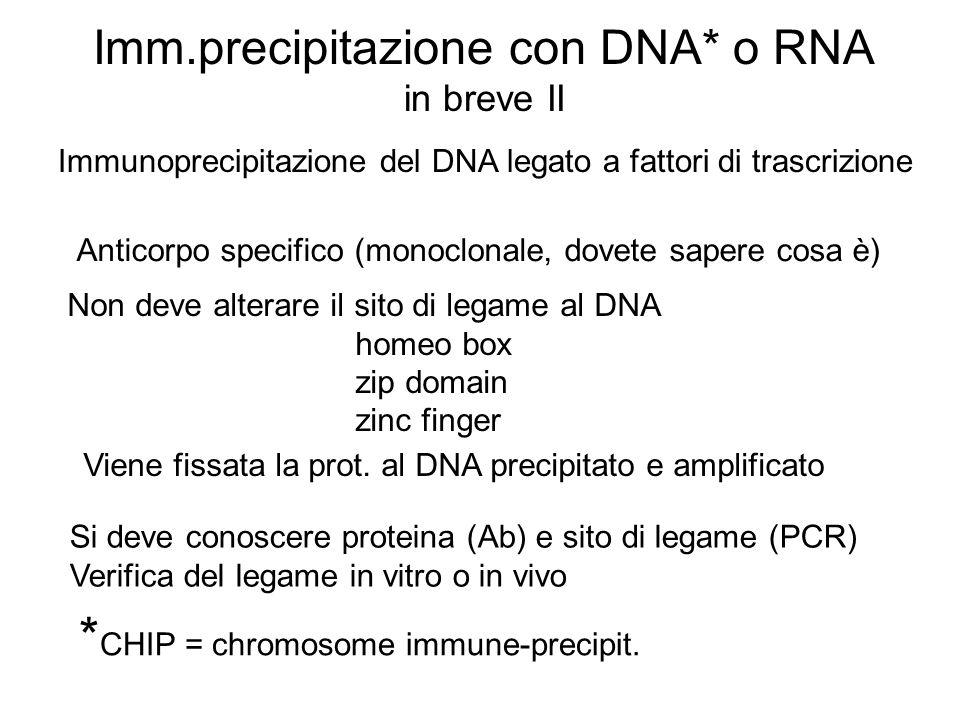 Imm.precipitazione con DNA* o RNA in breve II