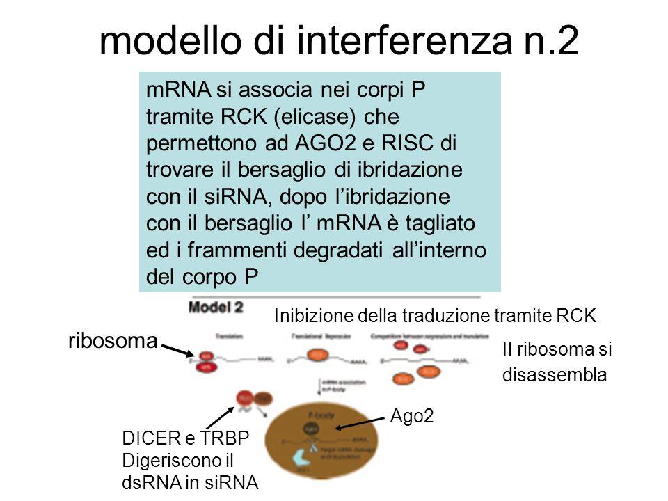 modello di interferenza n.2