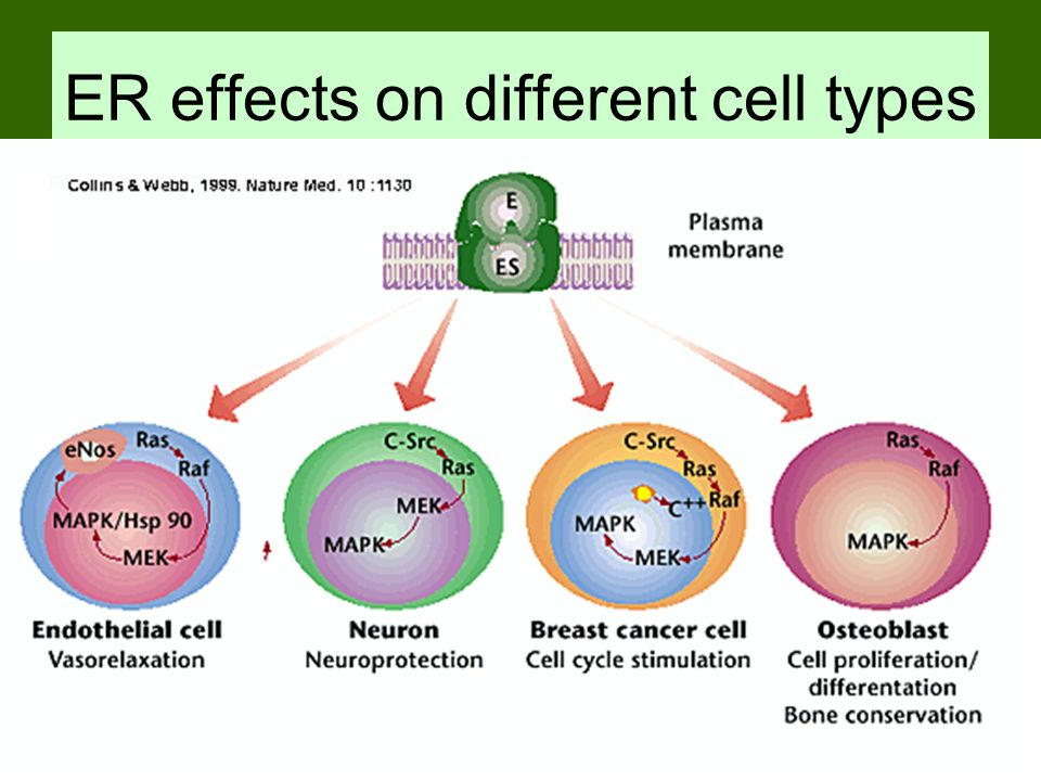 ER effects on different cell types