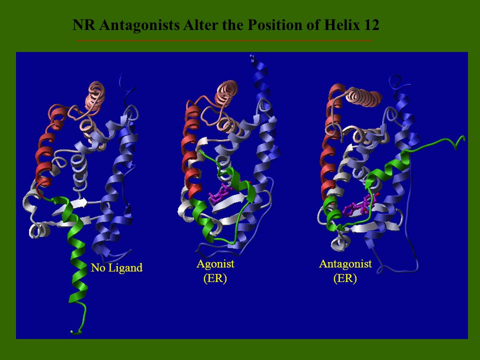 NR Antagonists Alter the Position of Helix 12