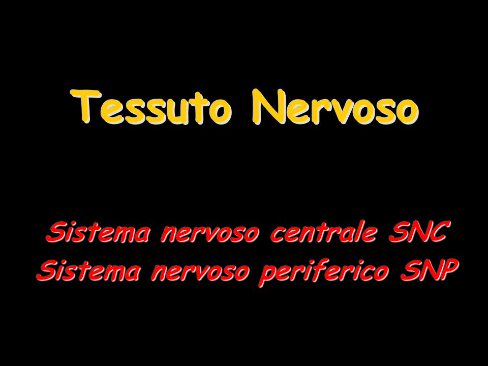 Sistema nervoso centrale SNC Sistema nervoso periferico SNP