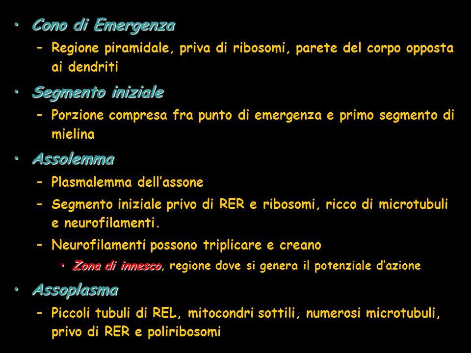 Cono di Emergenza Segmento iniziale Assolemma Assoplasma