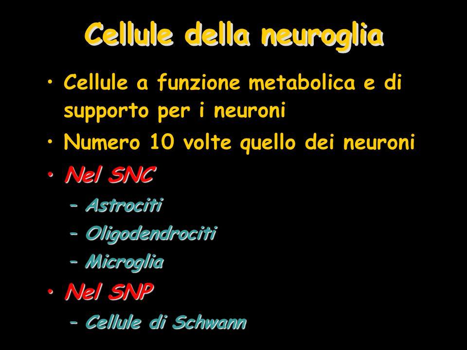 Cellule della neuroglia