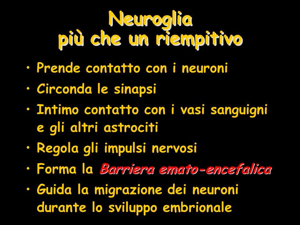 Neuroglia più che un riempitivo