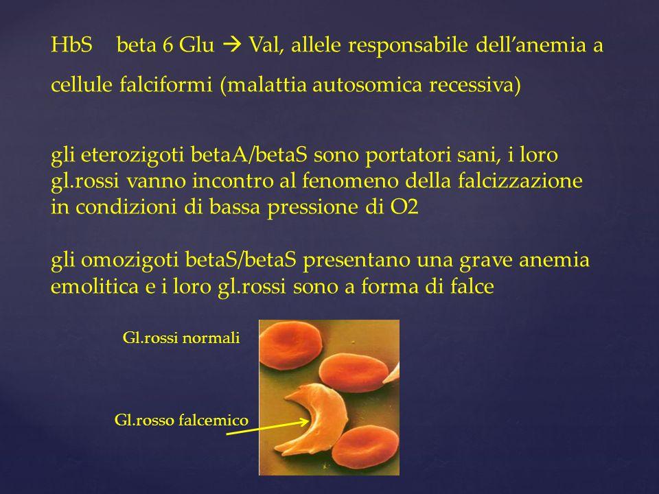 HbS beta 6 Glu  Val, allele responsabile dell'anemia a cellule falciformi (malattia autosomica recessiva)