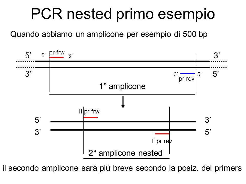 PCR nested primo esempio