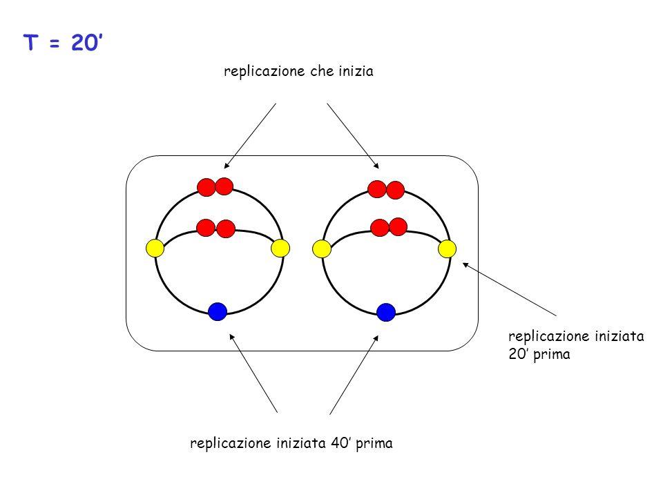 T = 20' replicazione che inizia replicazione iniziata 20' prima