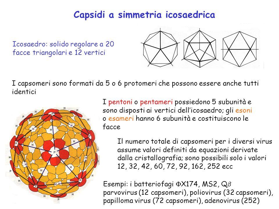 Capsidi a simmetria icosaedrica