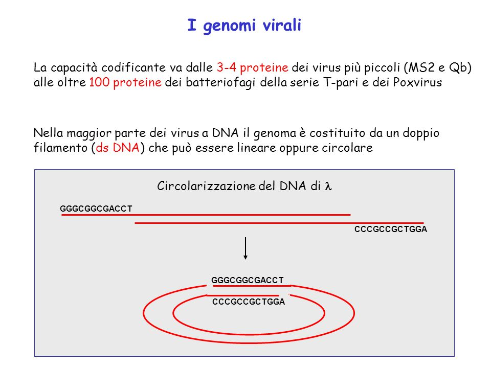 I genomi virali