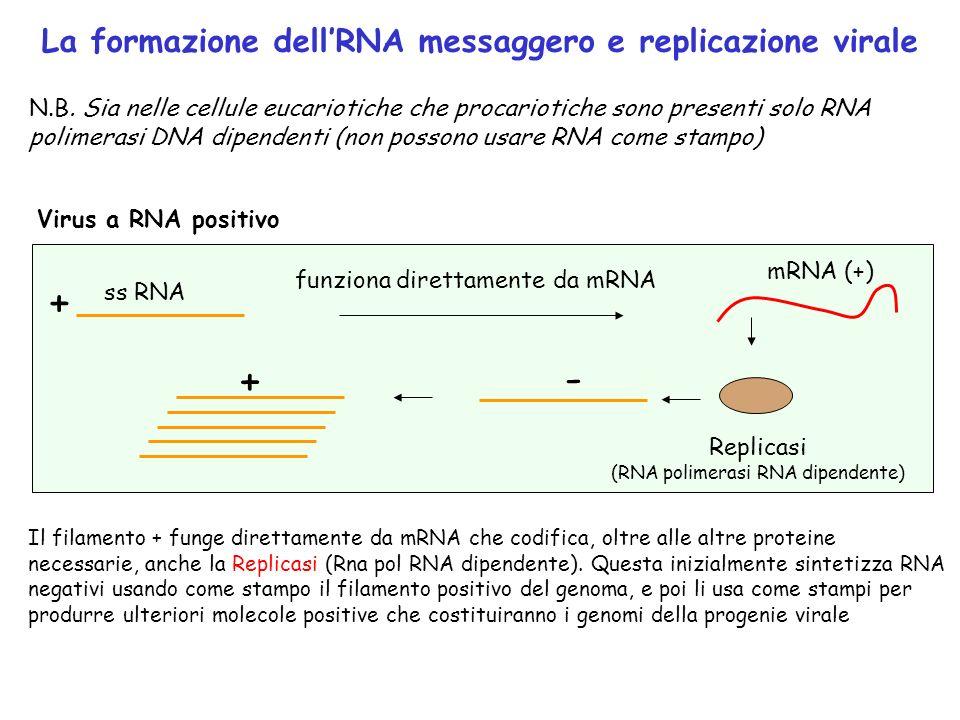 (RNA polimerasi RNA dipendente)