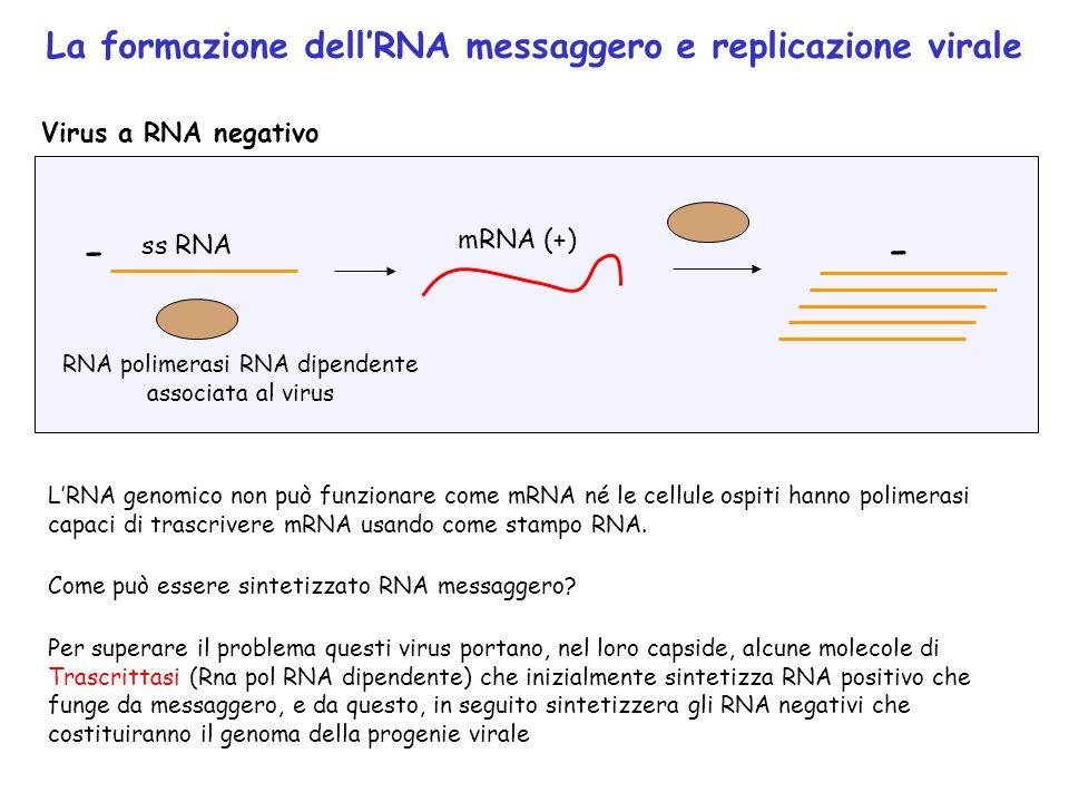 RNA polimerasi RNA dipendente