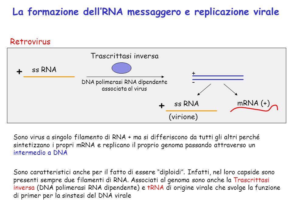 DNA polimerasi RNA dipendente
