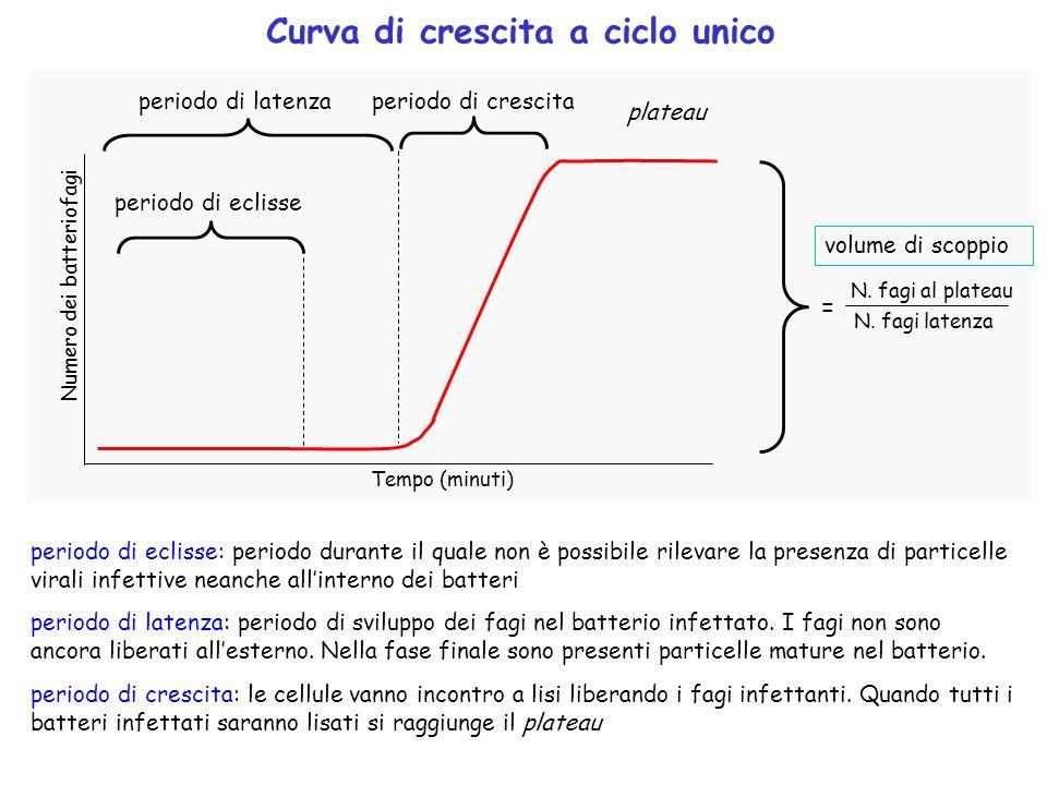Curva di crescita a ciclo unico