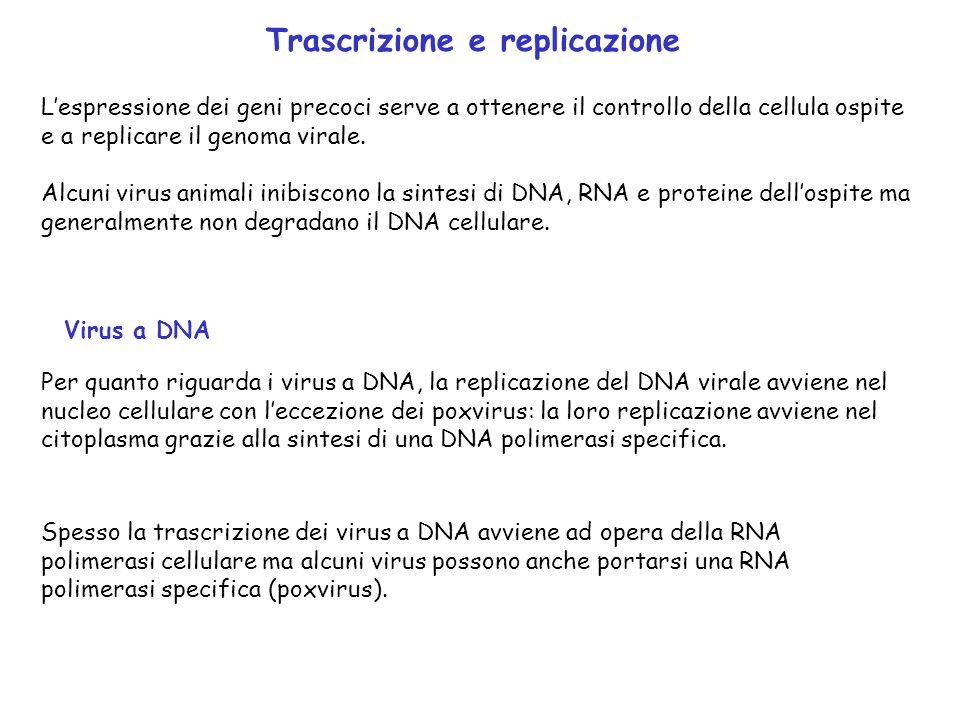 Trascrizione e replicazione