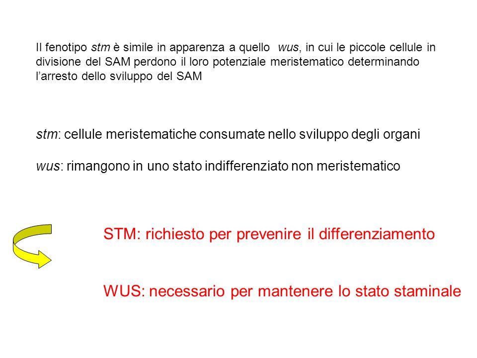 STM: richiesto per prevenire il differenziamento