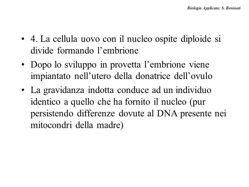 4. La cellula uovo con il nucleo ospite diploide si divide formando l'embrione