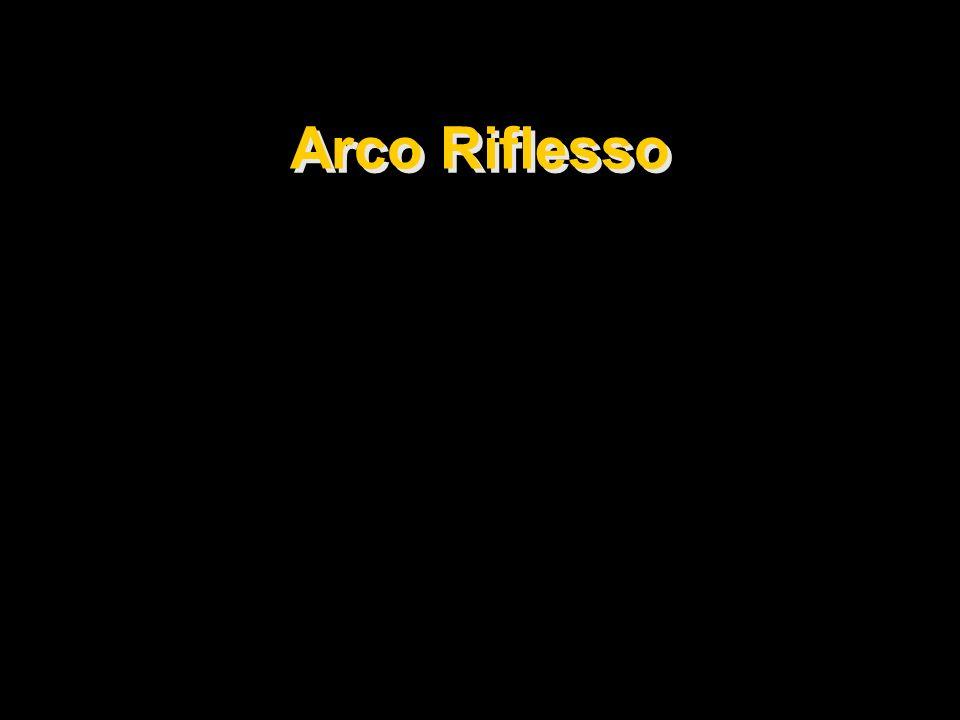Arco Riflesso