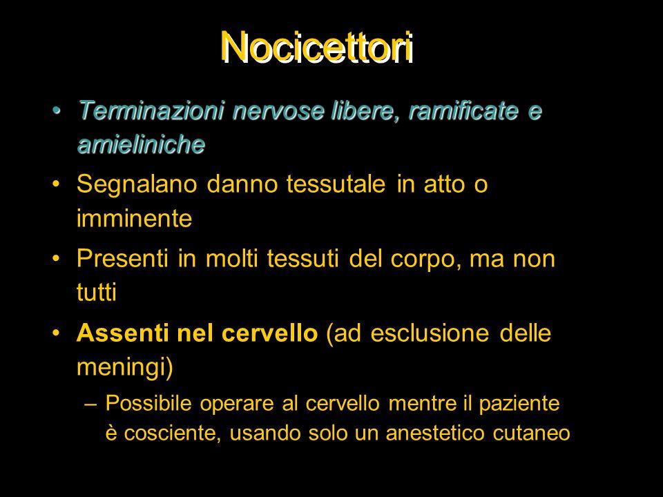 Nocicettori Terminazioni nervose libere, ramificate e amieliniche