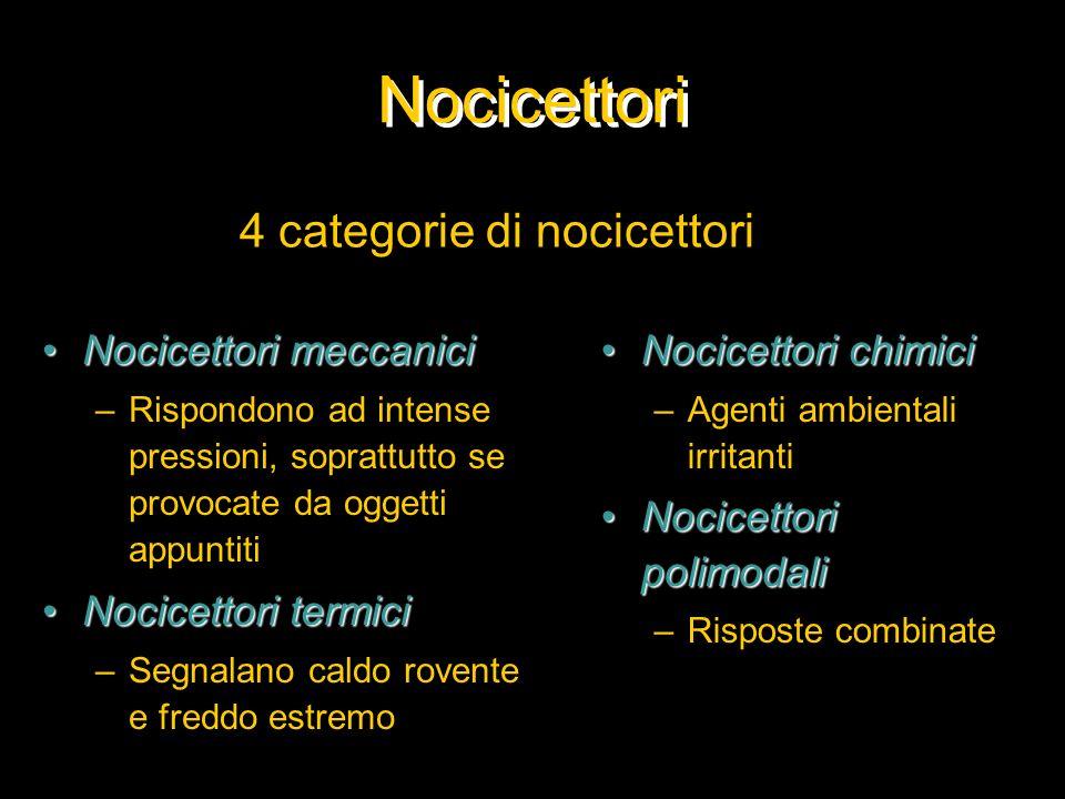 Nocicettori 4 categorie di nocicettori Nocicettori meccanici