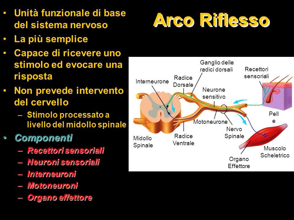 Arco Riflesso Unità funzionale di base del sistema nervoso