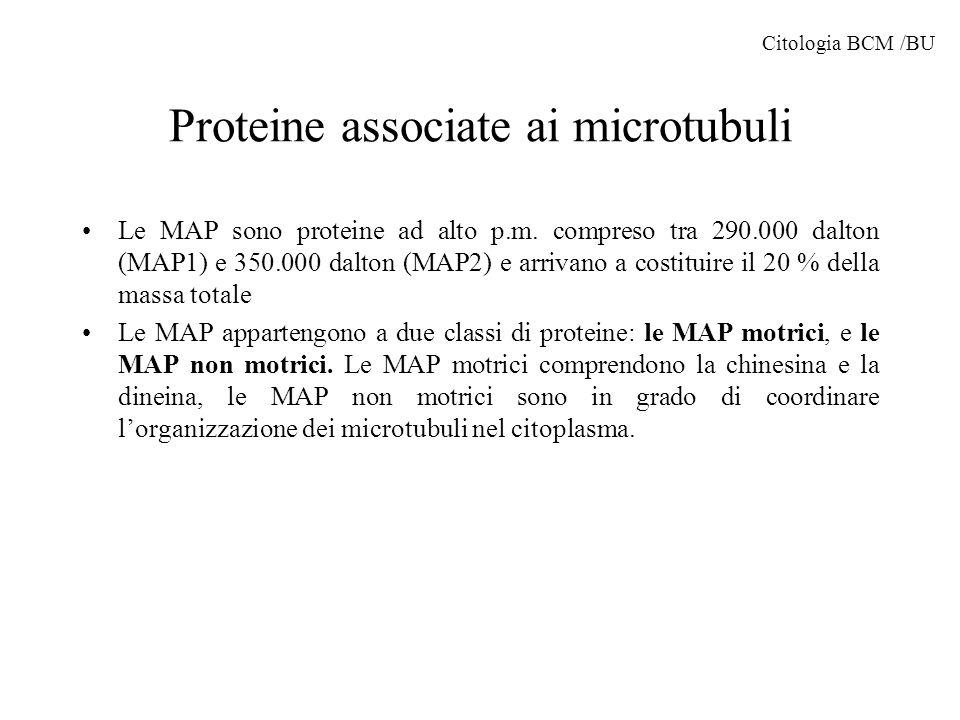 Proteine associate ai microtubuli