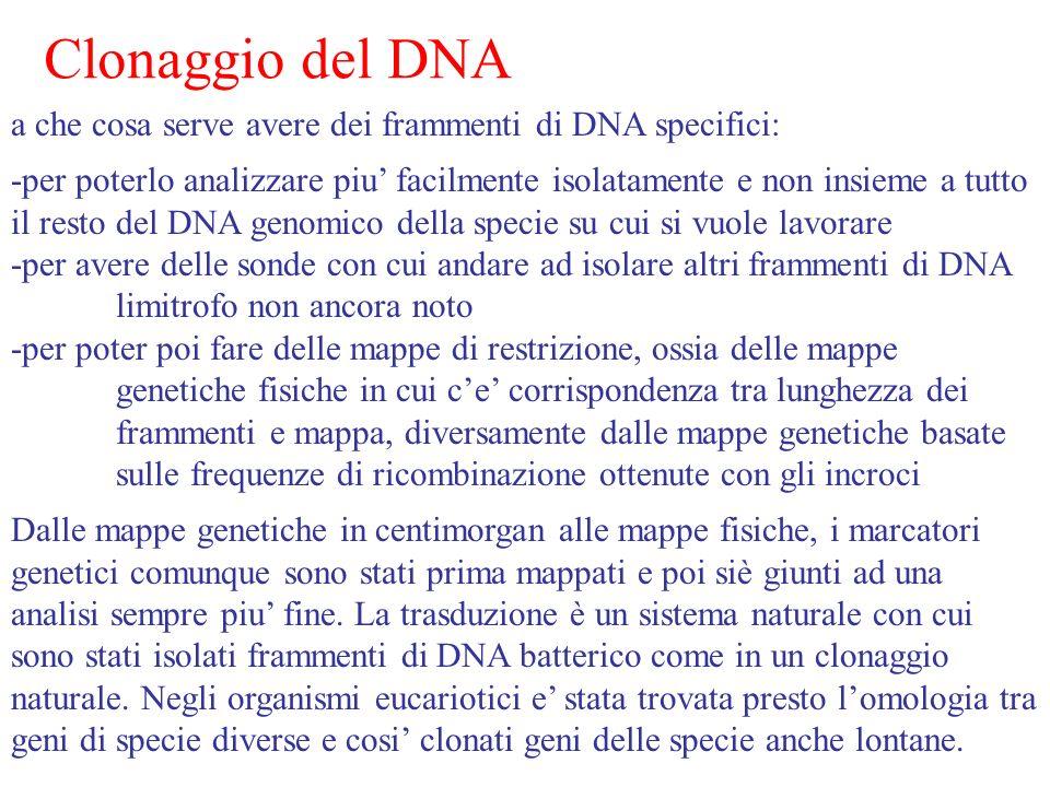 Clonaggio del DNA a che cosa serve avere dei frammenti di DNA specifici: