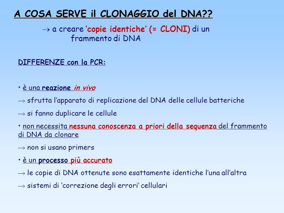 A COSA SERVE il CLONAGGIO del DNA