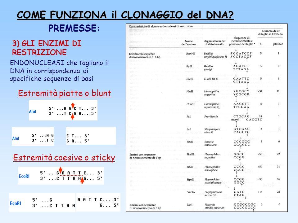 COME FUNZIONA il CLONAGGIO del DNA