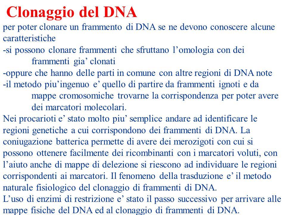 Clonaggio del DNA per poter clonare un frammento di DNA se ne devono conoscere alcune caratteristiche.