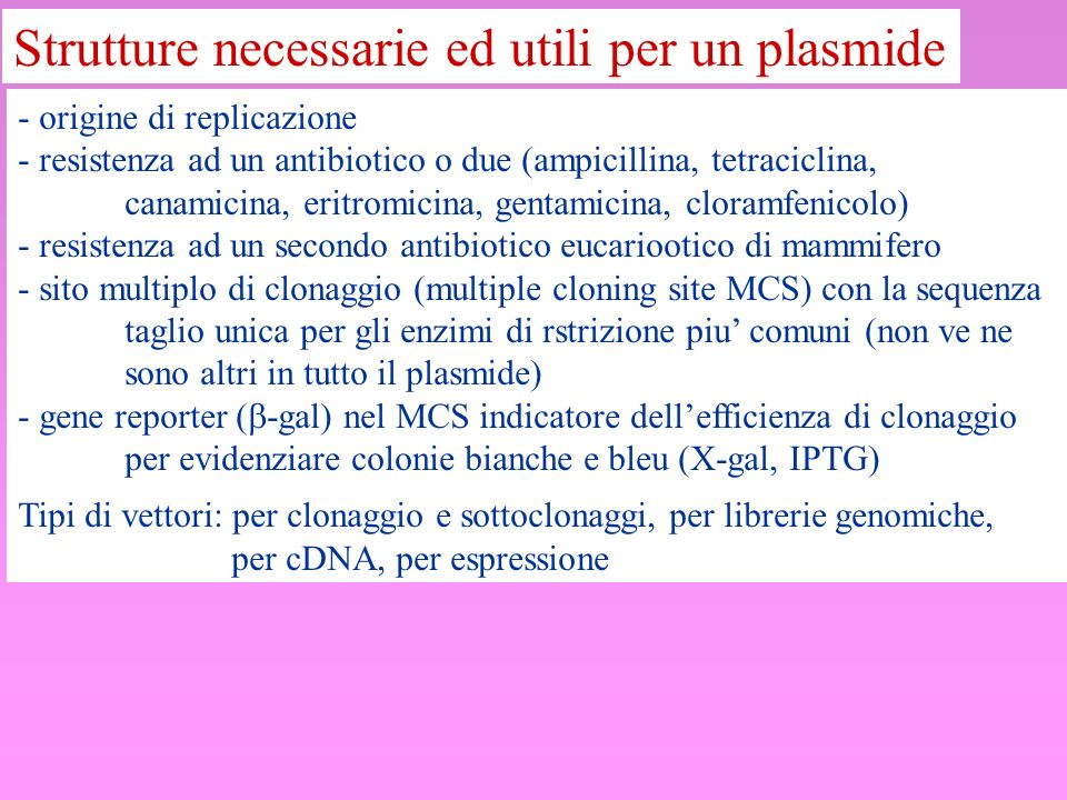 Strutture necessarie ed utili per un plasmide