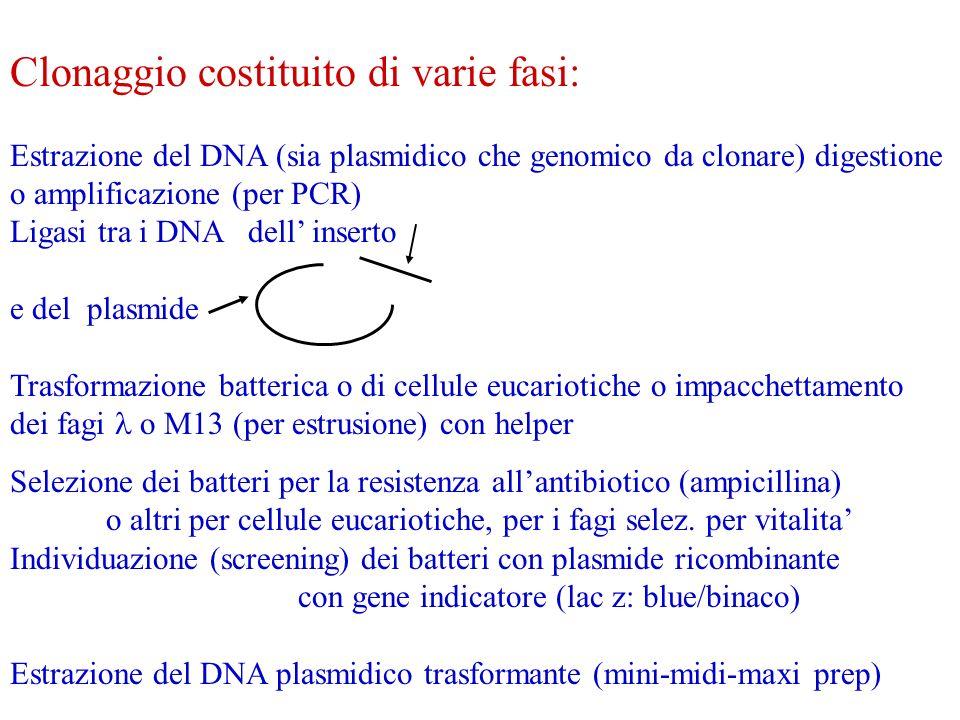 Clonaggio costituito di varie fasi: