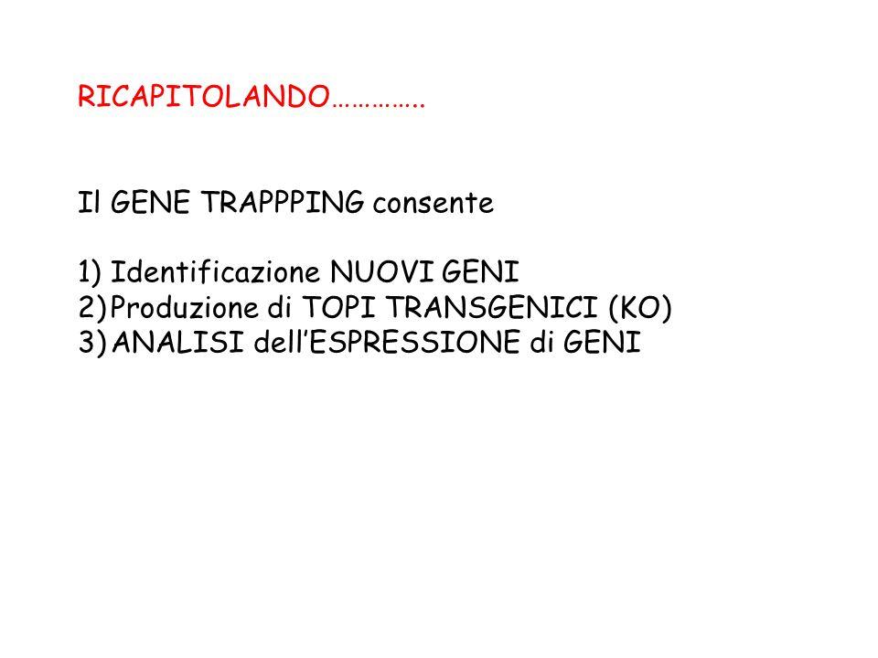 RICAPITOLANDO………….. Il GENE TRAPPPING consente. Identificazione NUOVI GENI. Produzione di TOPI TRANSGENICI (KO)