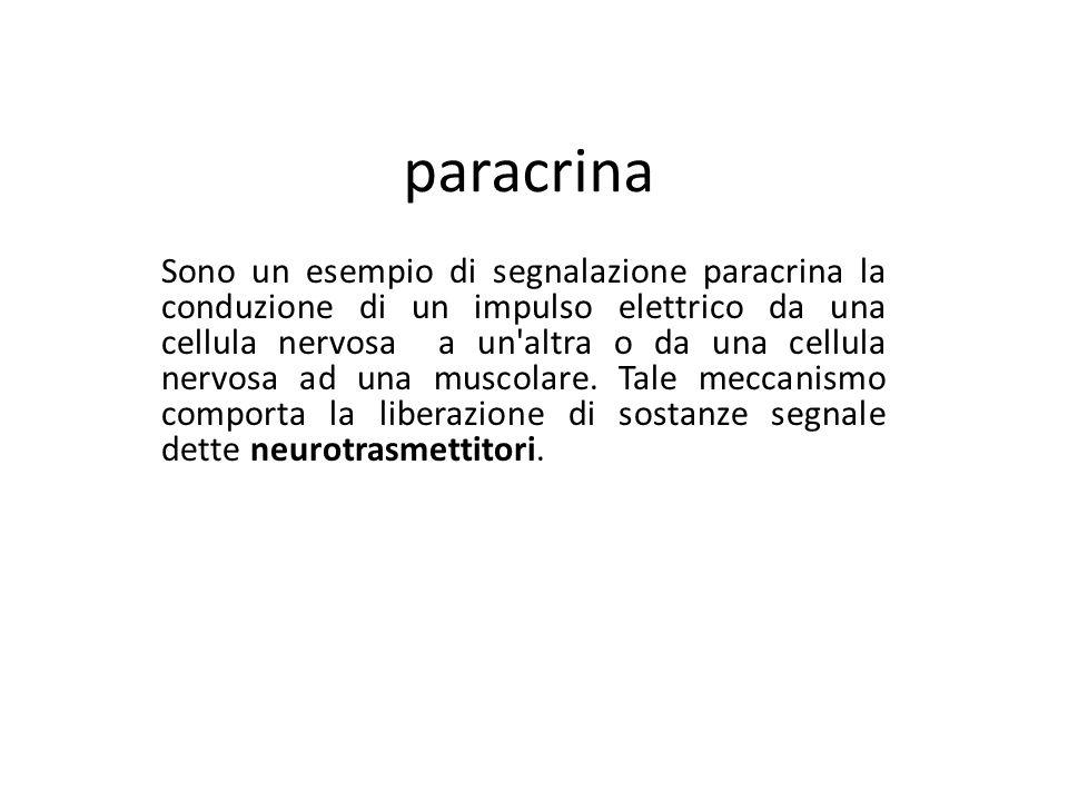 paracrina