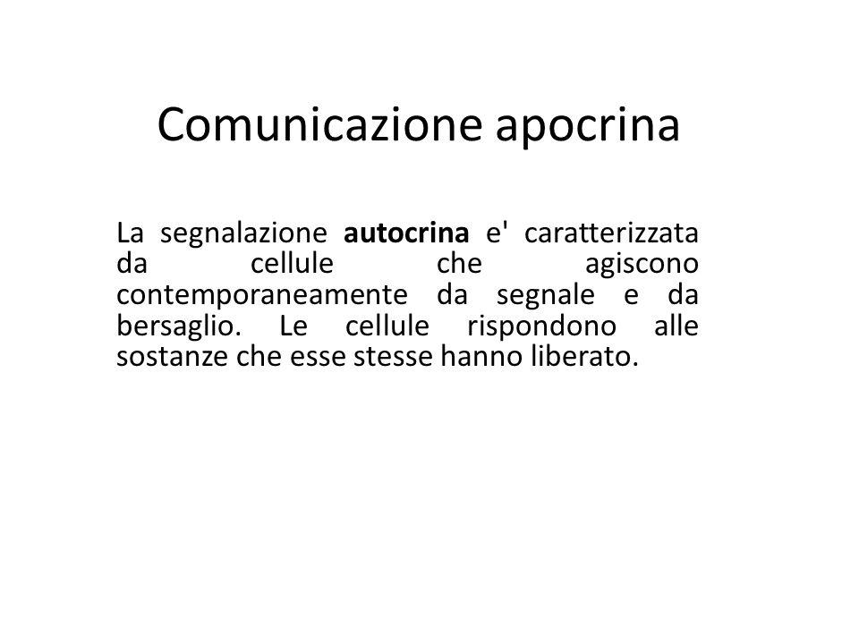 Comunicazione apocrina