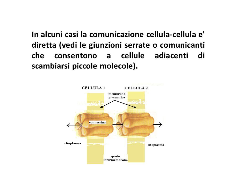 In alcuni casi la comunicazione cellula-cellula e diretta (vedi le giunzioni serrate o comunicanti che consentono a cellule adiacenti di scambiarsi piccole molecole).