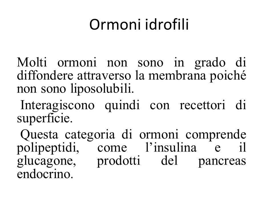 Ormoni idrofili Molti ormoni non sono in grado di diffondere attraverso la membrana poiché non sono liposolubili.