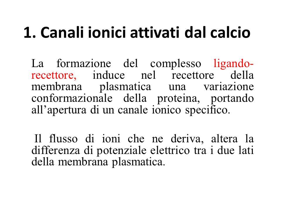 1. Canali ionici attivati dal calcio