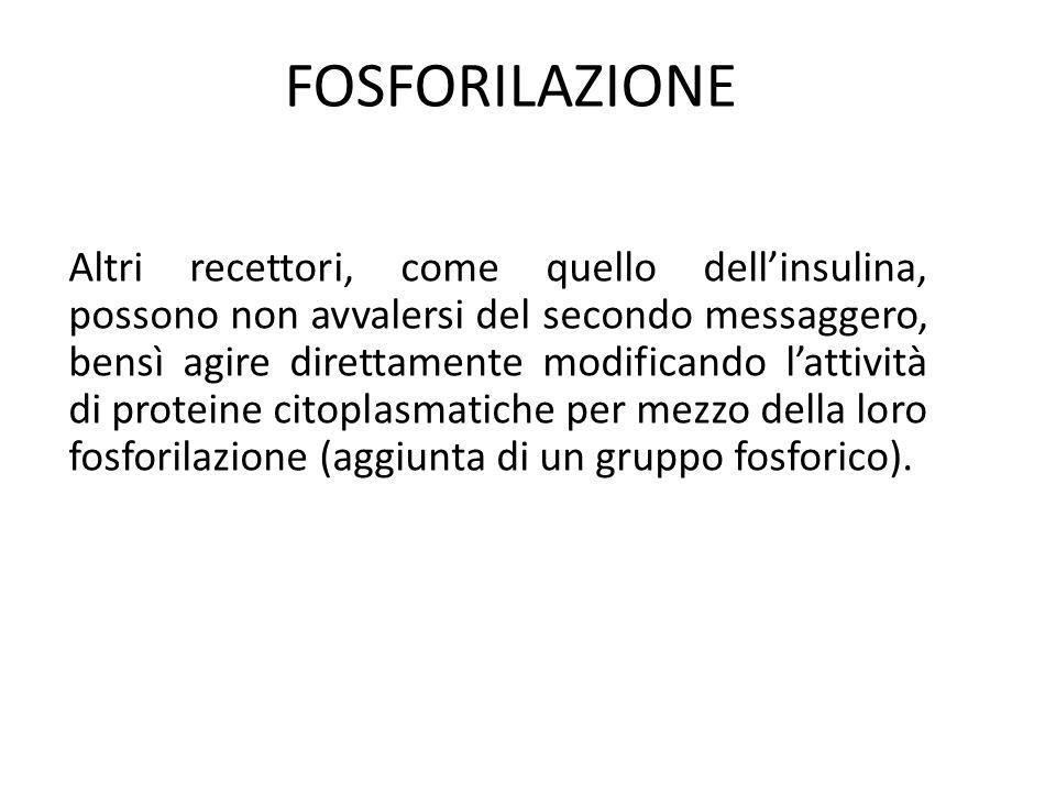 FOSFORILAZIONE