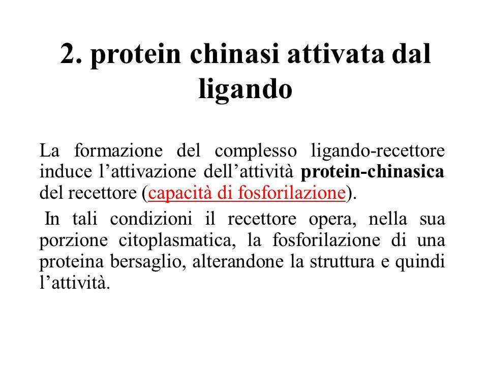2. protein chinasi attivata dal ligando