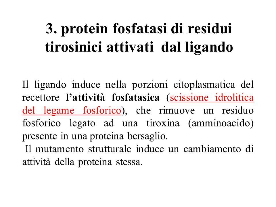 3. protein fosfatasi di residui tirosinici attivati dal ligando