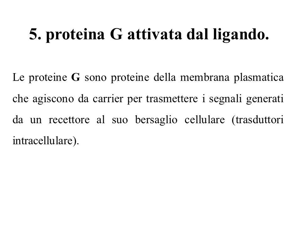 5. proteina G attivata dal ligando.