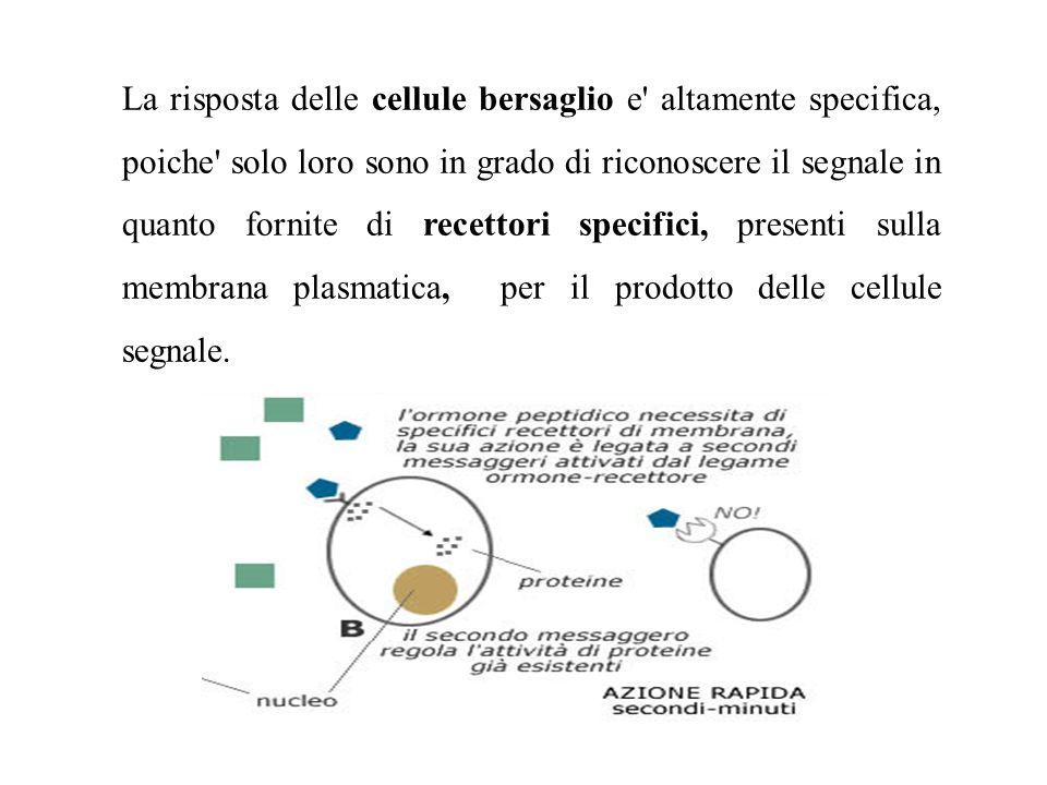 La risposta delle cellule bersaglio e altamente specifica, poiche solo loro sono in grado di riconoscere il segnale in quanto fornite di recettori specifici, presenti sulla membrana plasmatica, per il prodotto delle cellule segnale.