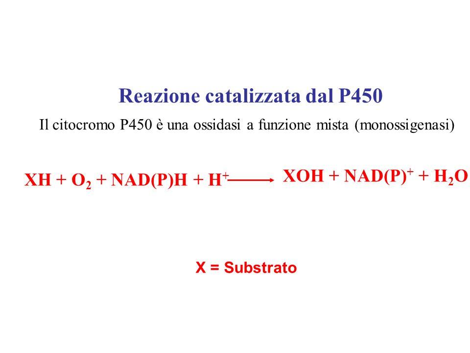 Reazione catalizzata dal P450
