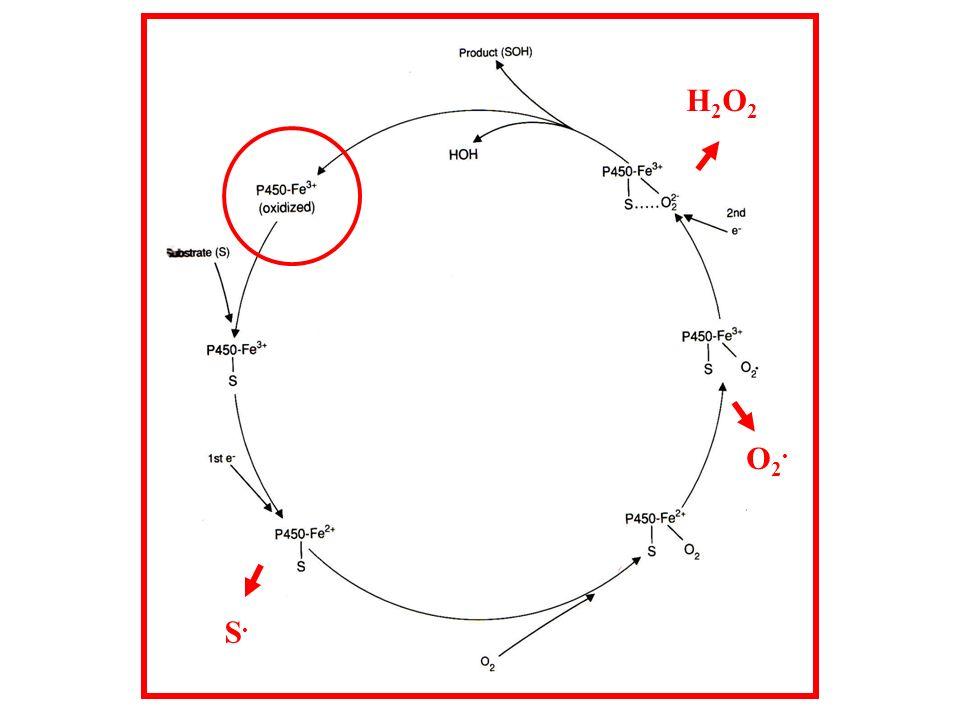 H2O2 O2. S.