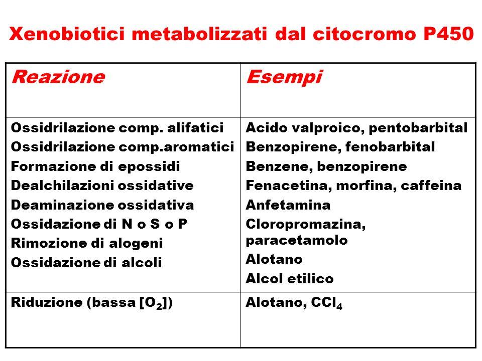Xenobiotici metabolizzati dal citocromo P450 Reazione Esempi