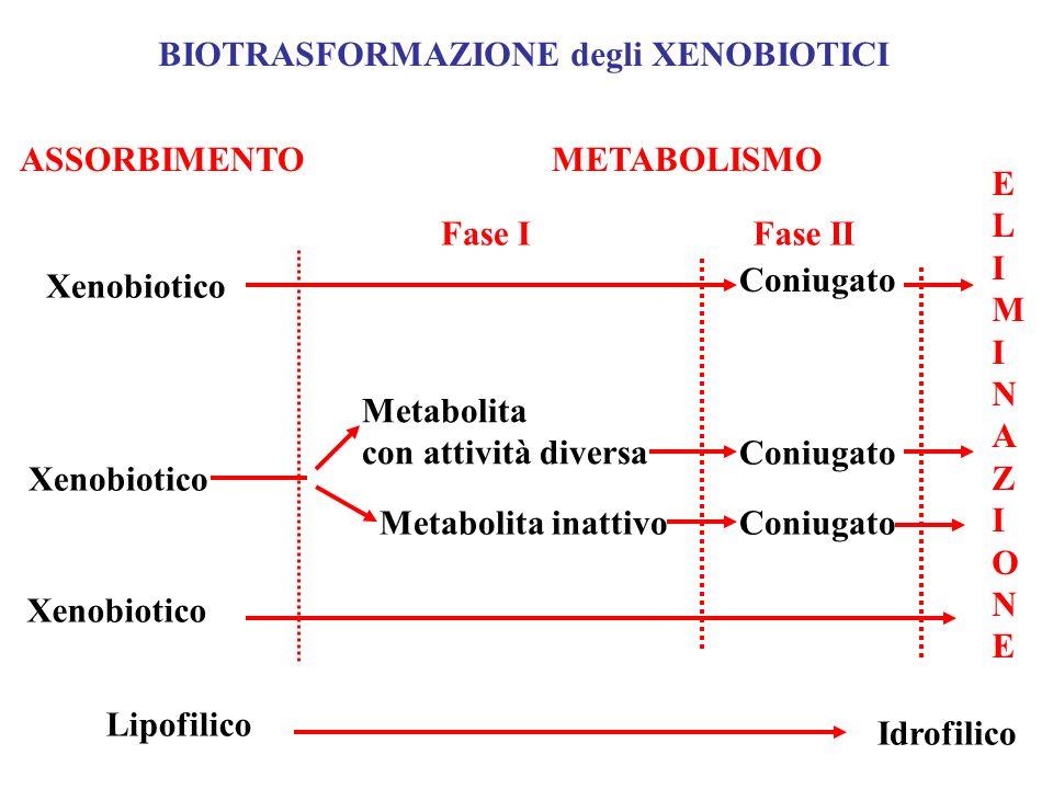 BIOTRASFORMAZIONE degli XENOBIOTICI