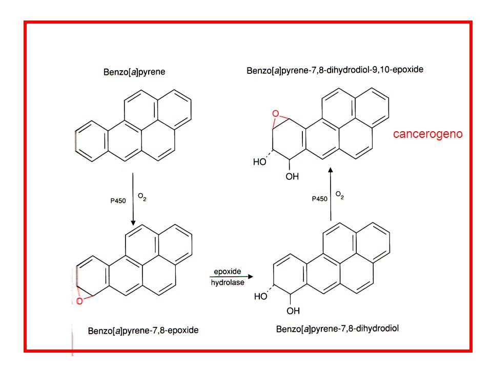 cancerogeno