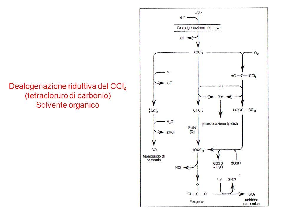 Dealogenazione riduttiva del CCl4 (tetracloruro di carbonio)